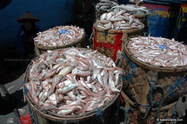 Harga ikan laut ikut-ikutan naik