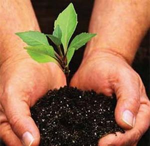 1 miliar pohon untuk dunia ,Usaha penanggulangan efek global warming